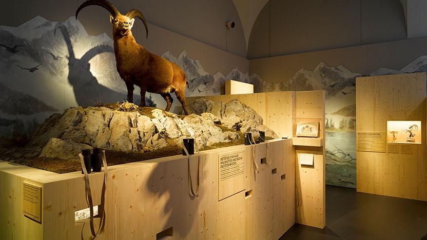 en/projekte/tierisch-schweizerisch-landesmuseum-zuerich/?cat=140
