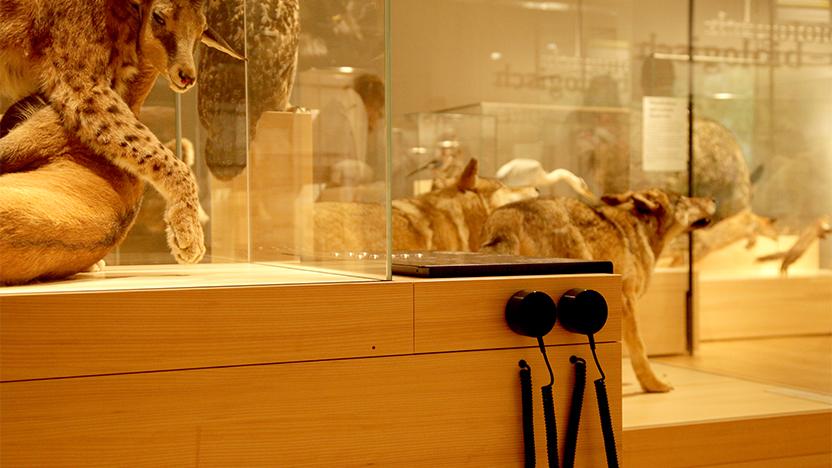 projekte/neue-dauerausstellung-naturmuseum-olten/?cat=154